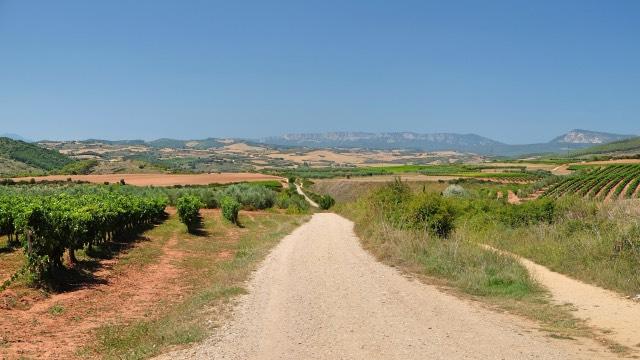 Camino Frances Rioja