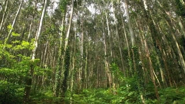 Durch Eukalyptuswälder mit Hund